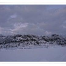 雪の梨畑散歩