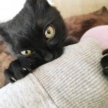 今さら#猫の写真ヘタ…