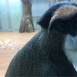 札幌市円山動物園(北…