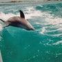 イルカと泳いで25年…
