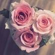 募集:バラの美容講座…