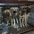 野犬の仔犬の保護とフ…