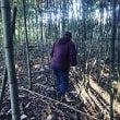 竹林に潜入