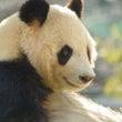 パンダと花の共通点
