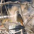 野鳥探索2018〜八…