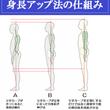 身長アップ法の仕組み…