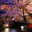 前世物語「桜の森の木…