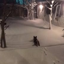記録的な大雪☆北陸の…