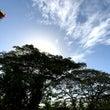 シャルガオは浄化の島