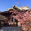 パワースポット桜神宮…