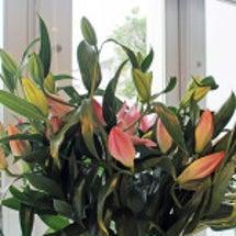 アンエルフのお花