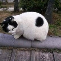 地域猫をしているから…