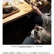 WEBサイト「ペトこ…