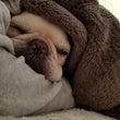 腕枕犬&諸々