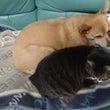 亀ちゃんと愛犬と愛猫…