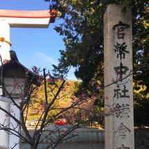 鎌倉宮の彼岸桜