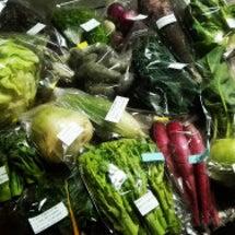 今週のイタリア野菜セ…