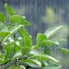 雨の日だからこそ【リセット】するのに最適の画像