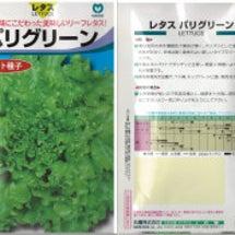レタスの種蒔き収穫な…