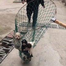 中国   5匹幼犬 …