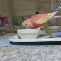 放鳥の様子~♪