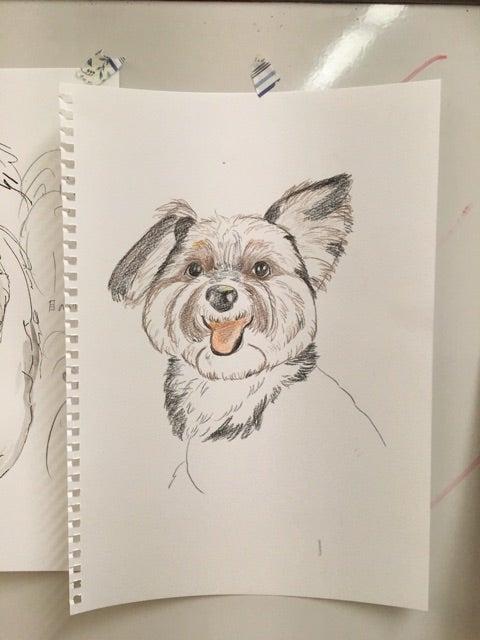 ペットの似顔絵教室 三鷹教室 線の書き方 長友心平のブログ 画家