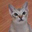 世界最小の猫って色々…