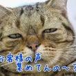 お客様の声~香川県集…