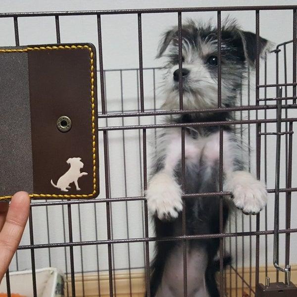獣医さんの犬と猫