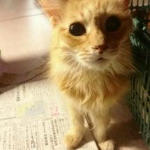 戸畑の猫たちとお礼