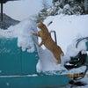 猫のニャン太は生物兵器の画像