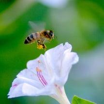 【ハチのおかげ】