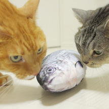 猫ズ初めて魚を見る?…
