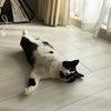 しょぼしょぼの猫とお知らせの画像