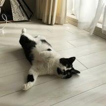 しょぼしょぼの猫とお…