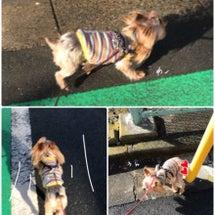 暖かな日だったね。