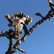 静岡の春は早い
