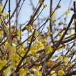 見た目の春