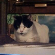 テレビから猫が、、、…