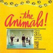 The Animal…
