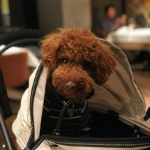 犬旅 レジーナリゾー…