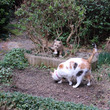 猫好みの猫砂