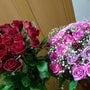 ◆大好きなバラちゃん