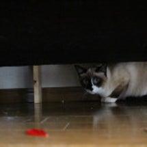 妖怪暴走レジ袋猫!?…