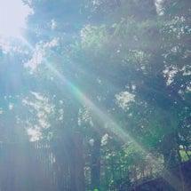 光のシャワー③木々と…