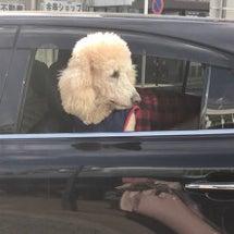 東京飲み会のお知らせ