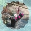 葉牡丹♧別名花キャベ…
