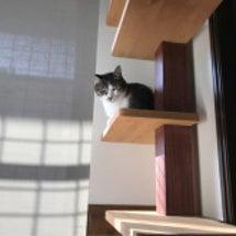 猫との信頼関係