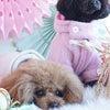 【レポート】SweetyHome FOTOZE お正月編の画像