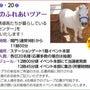 東京競馬場で馬と触れ…